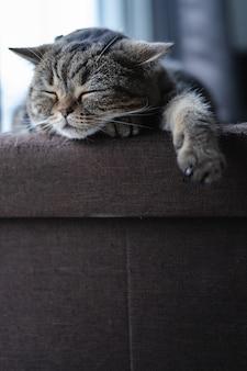 Kat schattige kleine kat slapen op de bank bij mijn huis kat perfecte droom