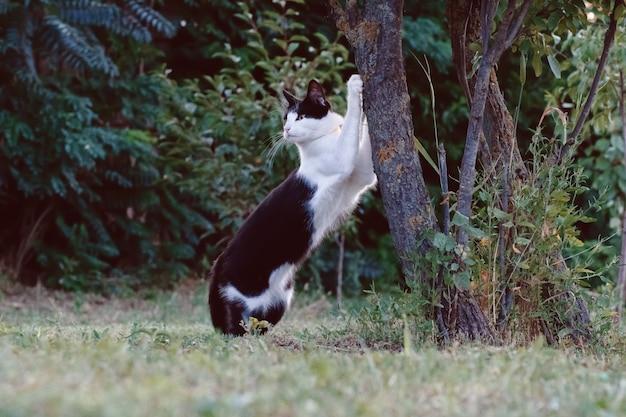 Kat scherpt zijn klauwen aan een boom.