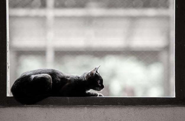 Kat slaap op raam