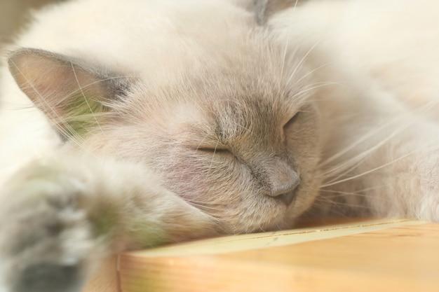 Kat slaapt in de natuur