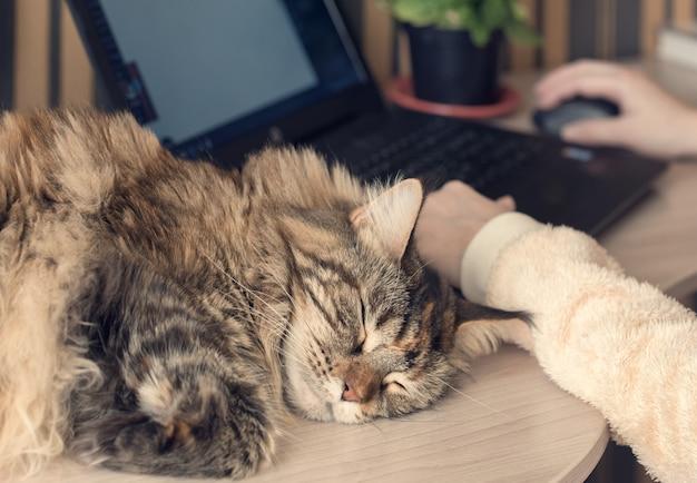 Kat slaapt op de tafel