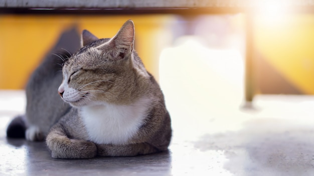 Kat slaapt op de vloer
