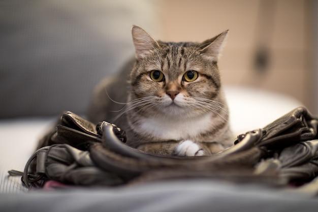 Kat slaapzak instinct dierlijk mooi huisdier