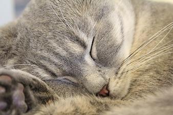 Kat slapen