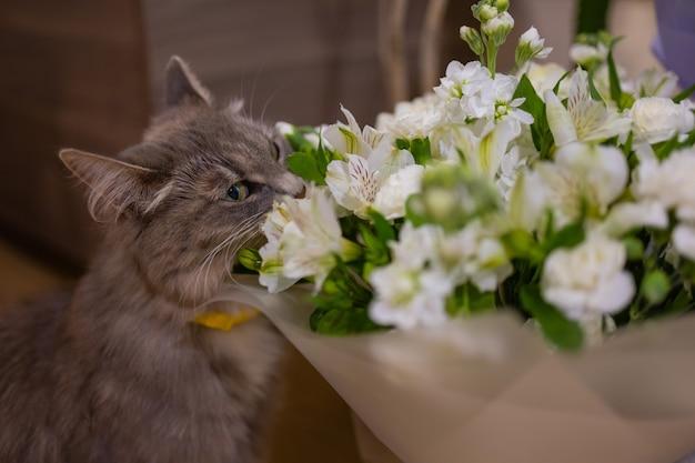 Kat snuift thuis een boeket verse lentebloemen met ranonkel. gezellige en tedere ansichtkaart.
