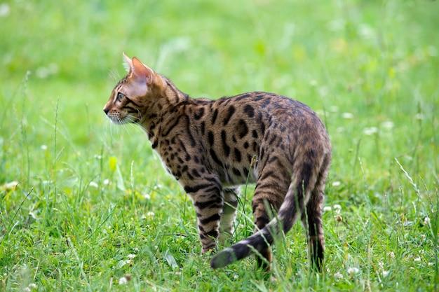 Kat spelen in de tuin