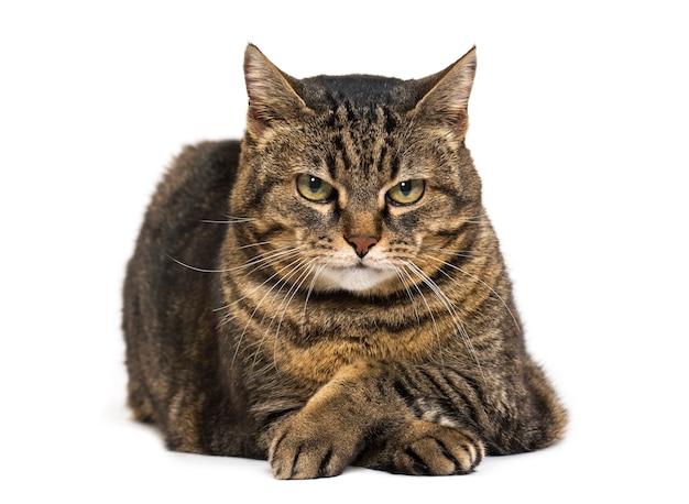 Kat van gemengd ras gekruiste benen liggen en ontspannen gekruiste benen