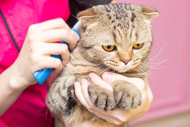 Kat verzorgen, kammen van wol.