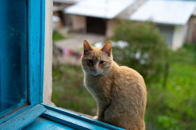 Kat zit bij een open raam