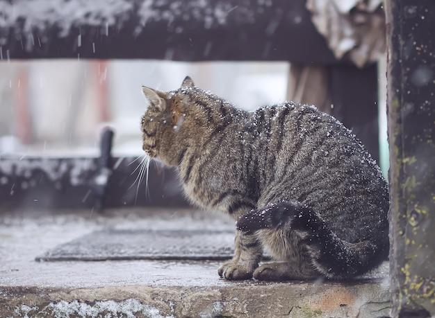 Kat zit op de drempel in sneeuwval