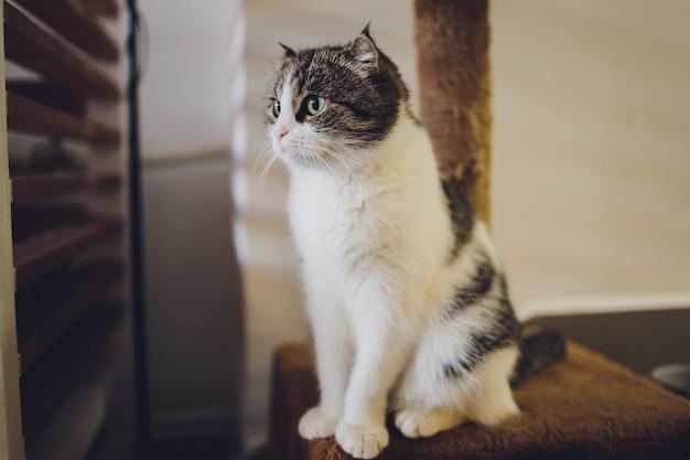 Kat zit op de krabpaal van het pluche huis van de kat.