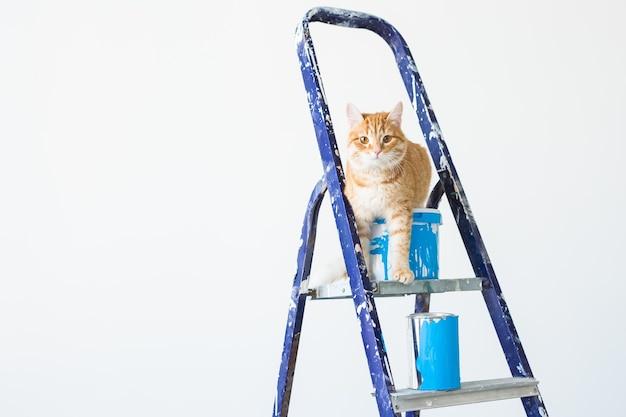Kat zit op de trapladder.