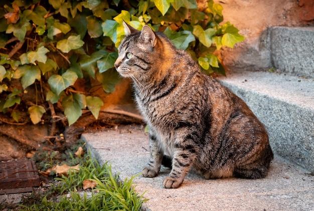 Kat zit op de trappen van een gebouw naast een groene plant