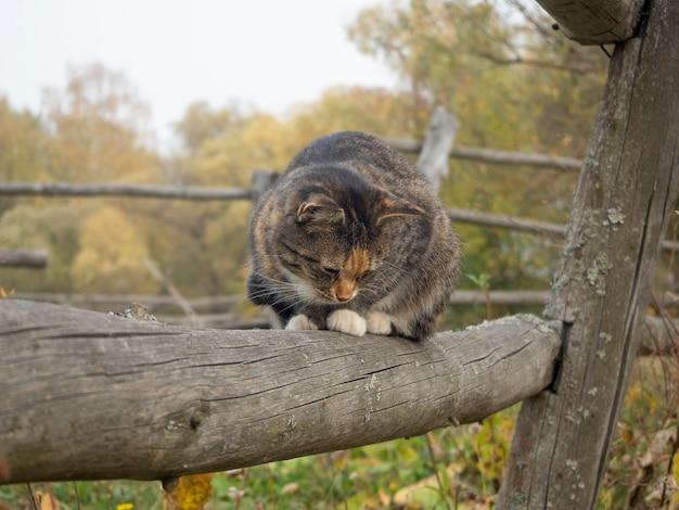 Kat zit op een houten hek in de herfst in het dorp
