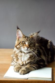 Kat, zittend op een houten tafel en een boek lezen