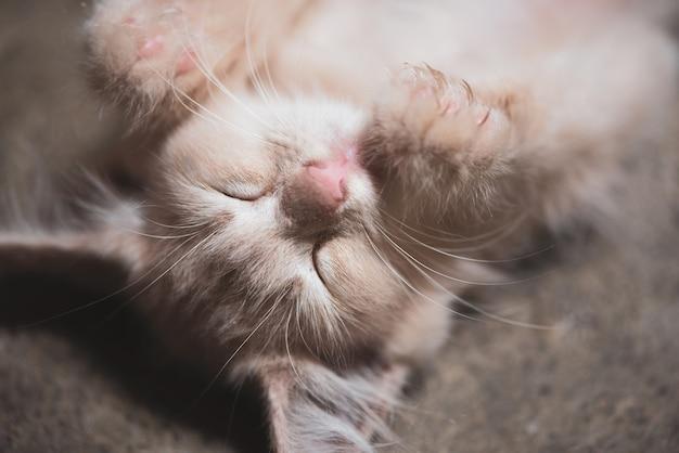 Katje die op de vloer leggen