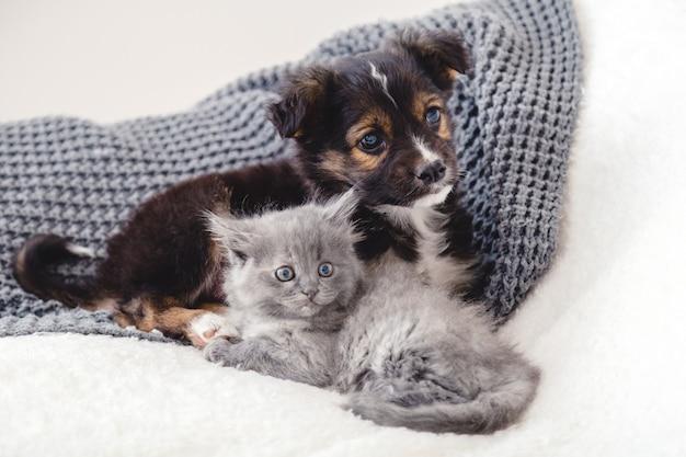 Katje en puppy. groep van twee kleine dieren liggen samen op bed. triest grijs katje en zwarte puppy op witte deken alleen thuis. kat hond vrienden. mooie dieren kinderen.
