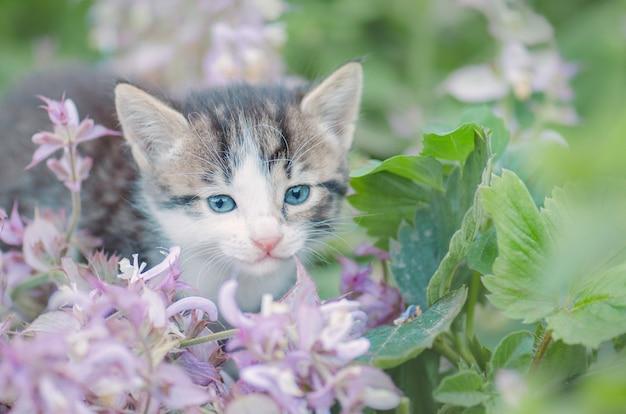 Katje in de tuin met bloemen op achtergrond