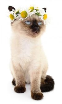 Katje in een krans