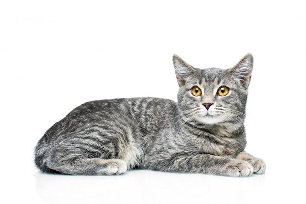 Katje op een geïsoleerd wit