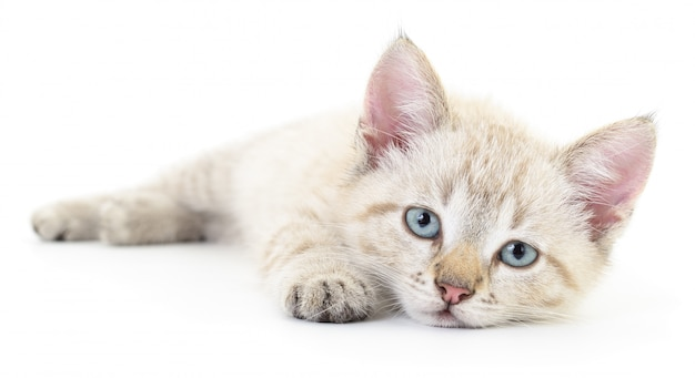 Katje op een wit