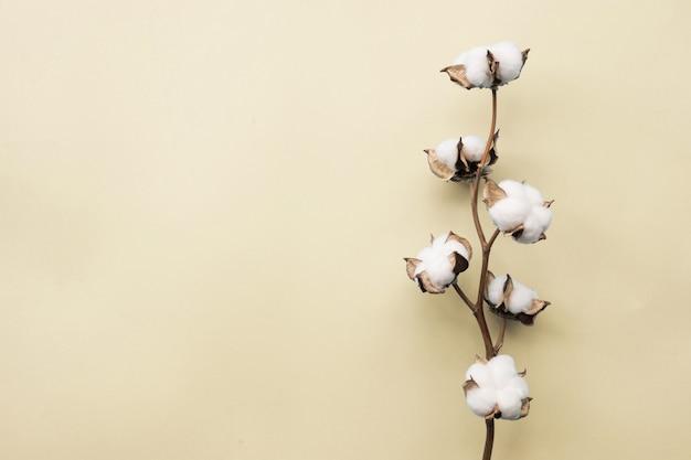 Katoenen bloem op achtergrond van het pastelkleur lichtgeele document