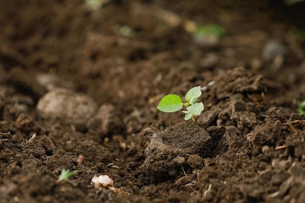 Katoenen kleine plant in boerderij