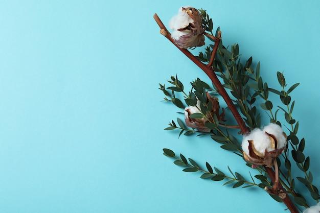 Katoenplant takken op blauw oppervlak