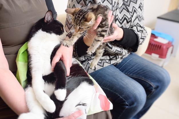 Katten in de handen van hun eigenaars in de rij voor onderzoek in de dierenkliniek