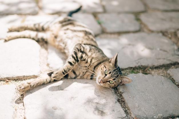 Katten in het oude centrum van budva kotor, dubrovnik, kroatië en mon