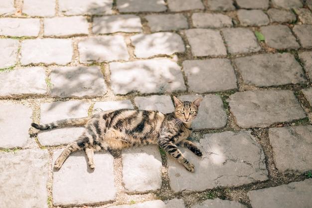 Katten in het oude centrum van budva kotor dubrovnik kroatië