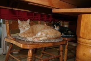 Katten in stoelen