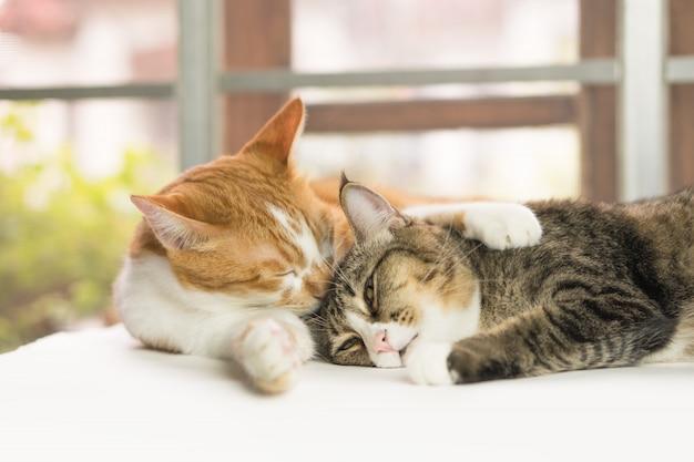 Katten reinigen het lichaam elke dag.