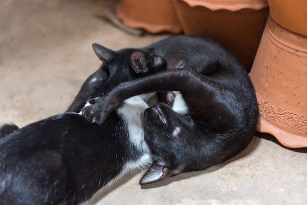 Kattenbaby een pasgeboren zuigende melk van moederkat