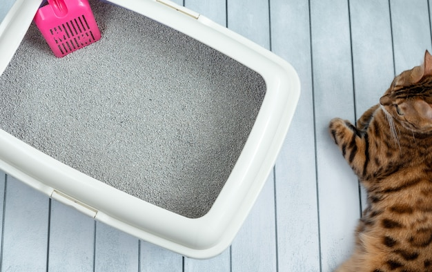 Kattenbak met roze schep en bengaalse kat
