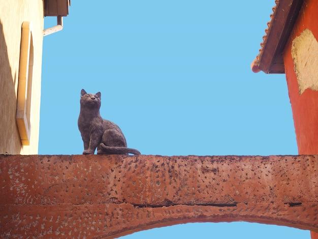 Kattenbeeldhouwwerk op de concrete straal tussen het gebouw