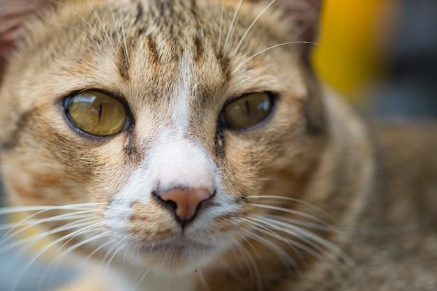 Kattengezicht en kijk naar de camera.