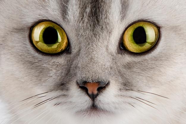 Kattengezicht met gele ogen close-up