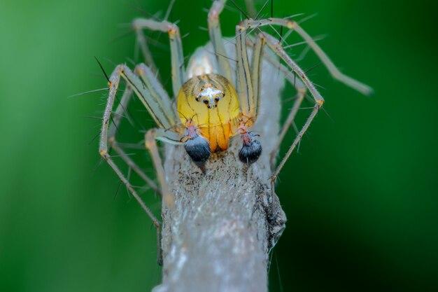 Kattengezicht spin natuur macro fotyograpy