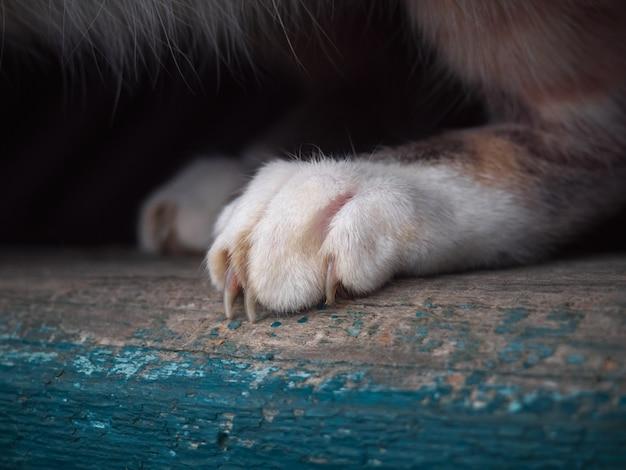 Kattenpoot close-up.