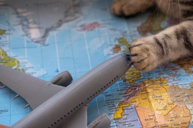 Kattenpoot die een vliegtuigstuk speelgoed houdt