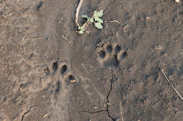 Kattenpootafdruk op natte grond