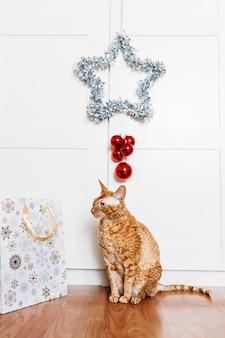 Kattenzitting in de kamer, ster voor het nieuwe jaar en kerstmis, huisdecoratie voor de vakantie, cadeauzakje