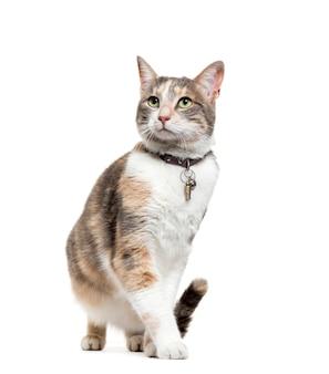 Kattenzitting van gemengd ras