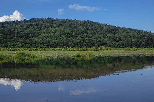 Kaw marsh, marais de kaw, frans guyana, frankrijk