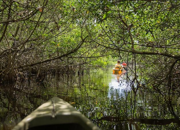 Kayaking in het nationale park van everglades, florida, de vs