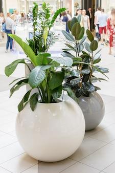 Kazan / rusland - 10 mei 2019: interessante en ongebruikelijke potten voor planten met ronde vormen. creatief interieur.