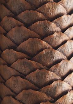 Kegel textuur backround