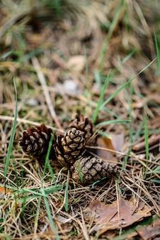 Kegels in het lentebos.