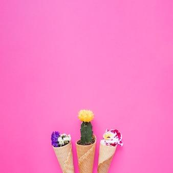 Kegels met bloemen en cactus